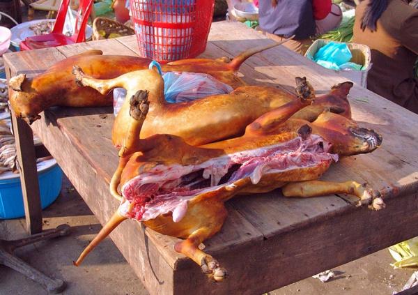 psí maso 5